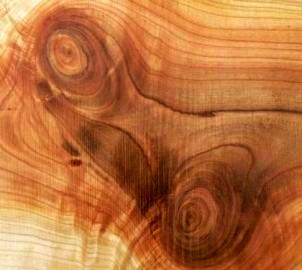 vzor dřeva
